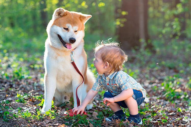 søte og gode hunder