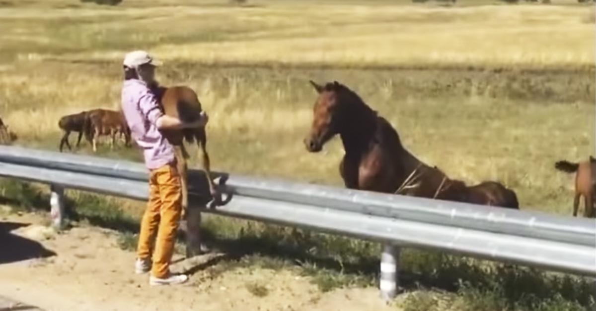 hest fyr sende bryster