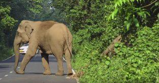 elefant_toppbilde