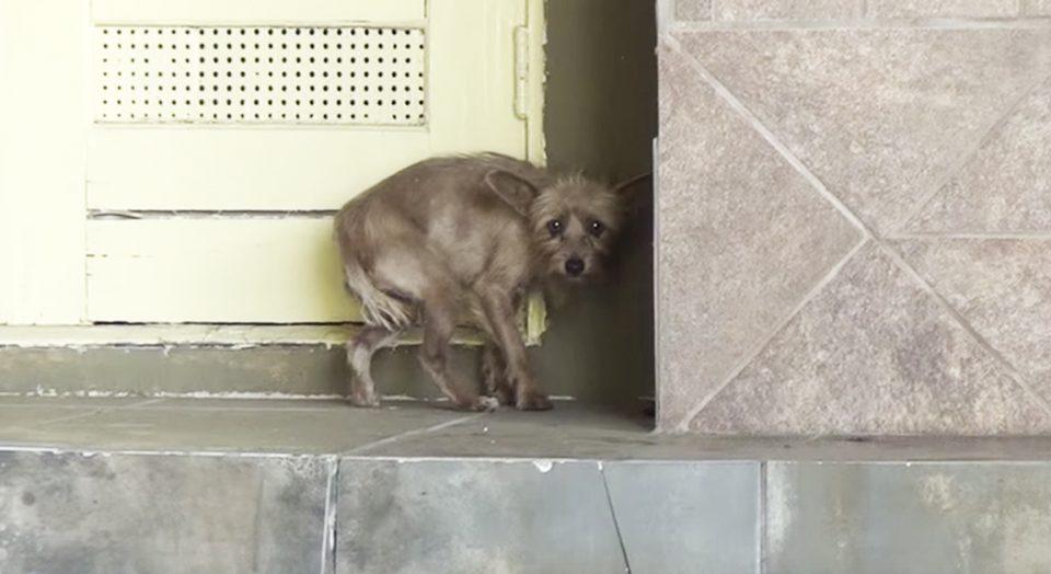 hund_reddes_toppbilde