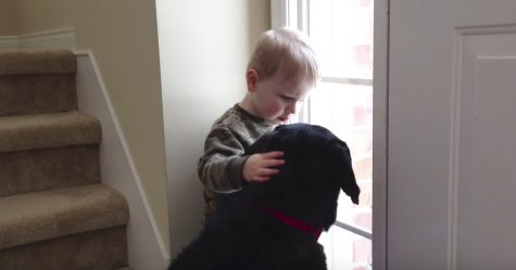 hund_vindu